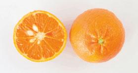 afourer-mandarins