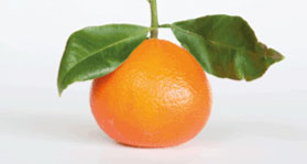 daisy-mandarins