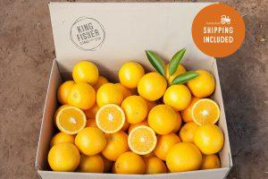Premium Valencia Oranges 10kg FHD